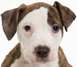 dog bite liability